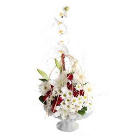 Papatyalı Güllü Orkide